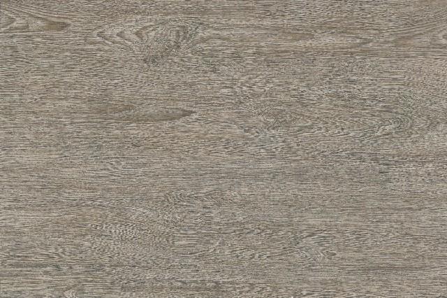 CF69508P-美洲灰橡